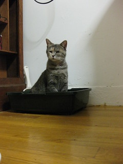 queen of her litter box