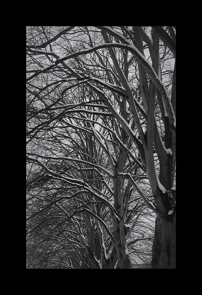 Photography: Snow on Branches by Nicholas M Vivian