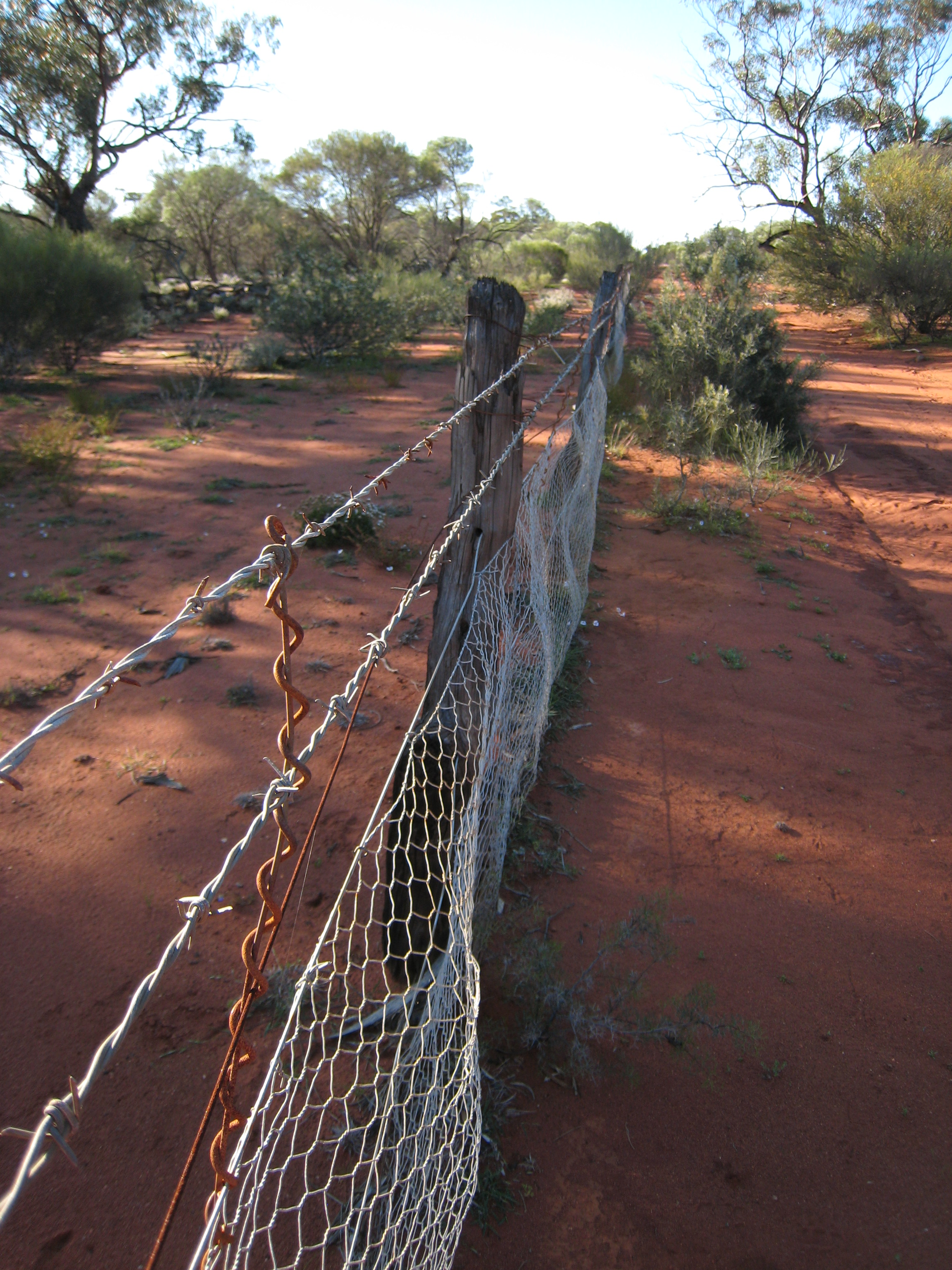 follow the rabbit proof fence essays
