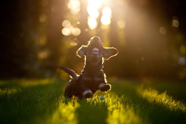 Puppy joy