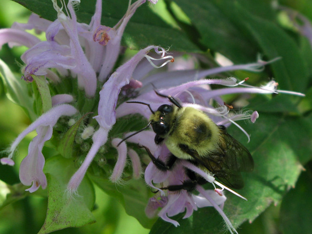 2010.07.15 - Bumblebee