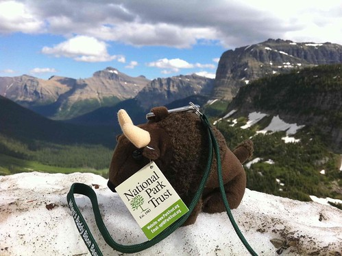 Buddy Bison enjoying the view at Glacier National Park.