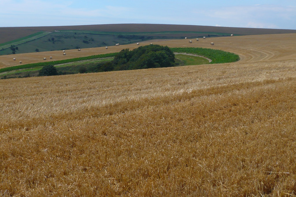 Fields, South Downs