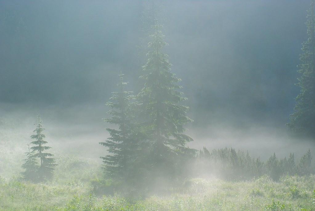 Foggy Bottom in the High Tatras