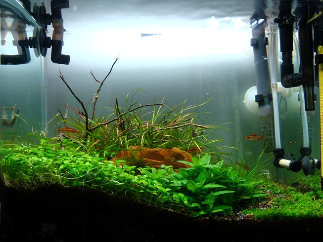 aquarium 12l 28 images fish r panoramic fish tank 12l black ebay aquarium 12l 28 images. Black Bedroom Furniture Sets. Home Design Ideas