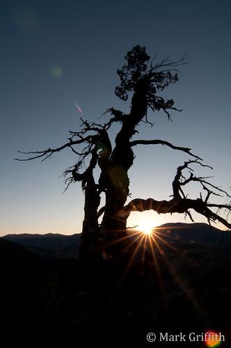 sunrise dawn utah flare logan logancanyon dawnpatrol dsc7871 jardinejuniper