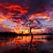 2670 Sunset in the Enriquillo Lake - Dominican Republic by Carlos A. Objio Sarraff