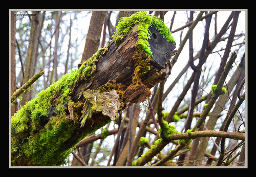 DSC_0176_1_72 - Dead Limb Supports Liffe
