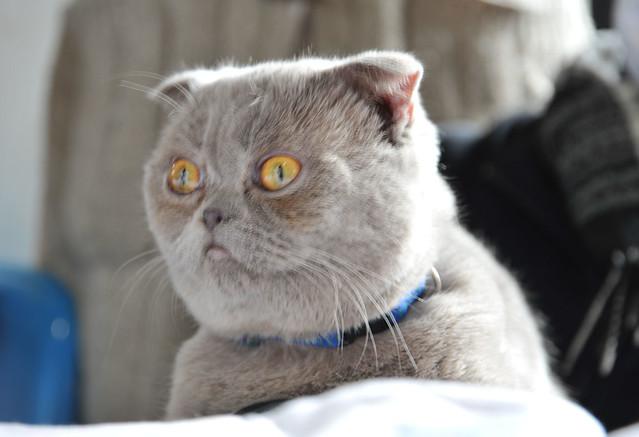 孙渣主席软妹陪 真猫黑猫皆卖萌-成都CD7第二日-星宫动漫