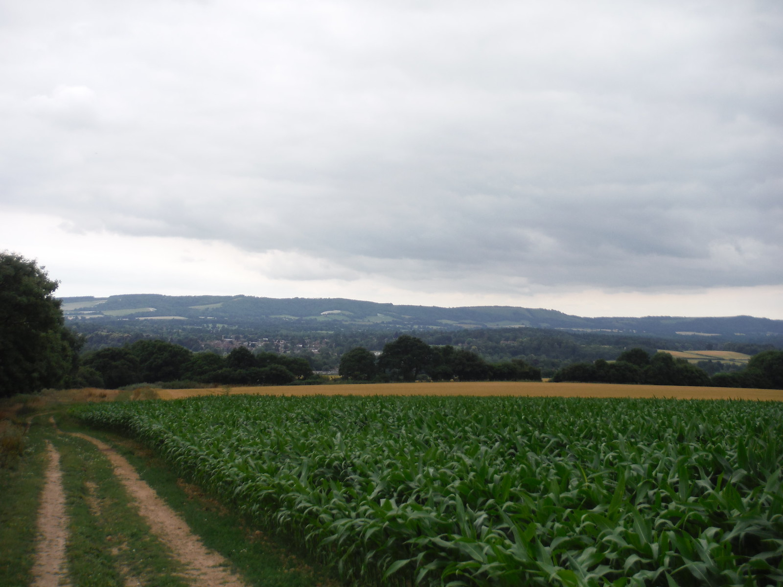 South Downs from field north of Easebourne SWC Walk 218 Haslemere to Midhurst (The Midhurst Way)
