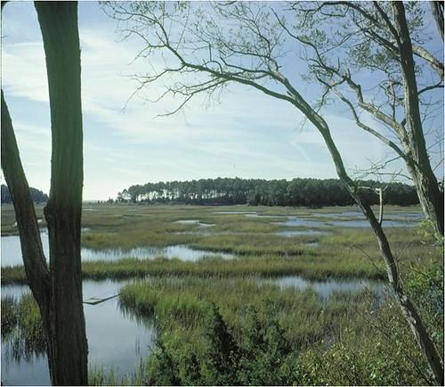 river landscape wildlife conservation va environment nationalwildliferefuge cooperative capecharles northatlantic atlanticshore usfishandwildlife conservationinclimatechange easternshoreofvanationalwildliferefuge