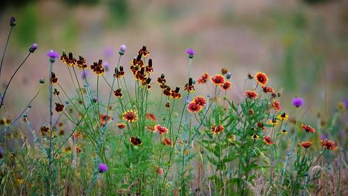 Rattler Flowerscape