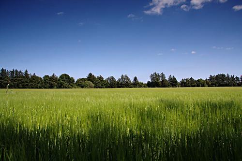 blue summer canon tripod ndgrad greensummerfield