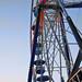 Butler County Fair 2010