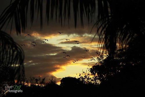 "Quarta-Sunset - Be ""Free As A Bird"""