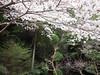 Photo:水越峠 - Mizukoshi Pass // 2010.04.10 - 10 By Tamago Moffle