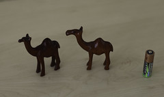 Camel Collection 164-5