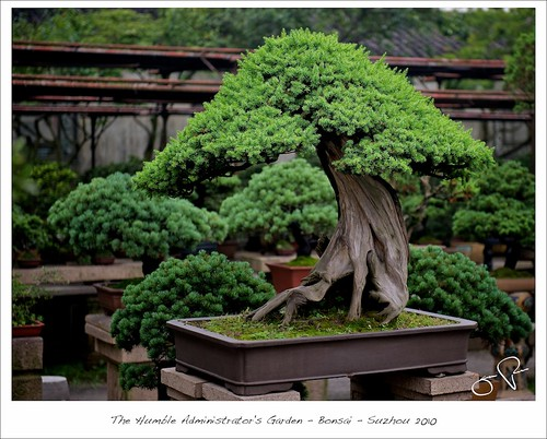 Latest garden design sozho garden bongsai for Latest garden design