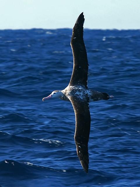 MS Albatros  Schiffsbeschreibung  beliebtes