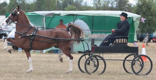 Hackney Horse and Pony Classes