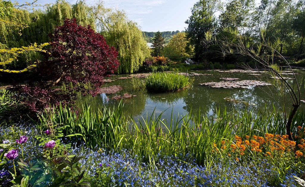 Monet's Garden in Giverny, France - The Pond (IV)