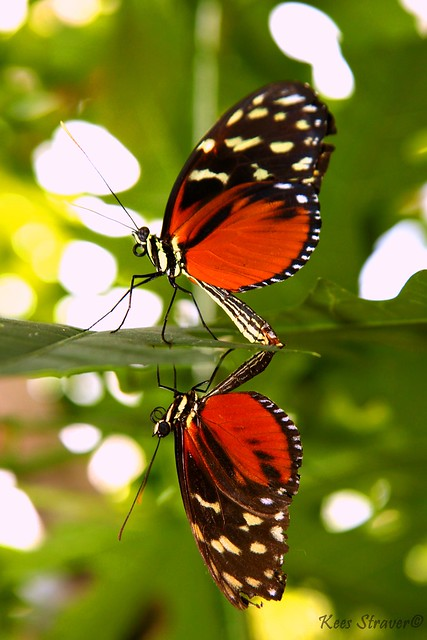 R rated butterfly photography