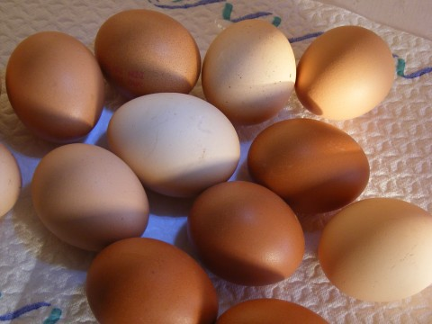 Chicken-Eggs_325223-480x360