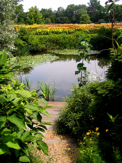 Tranquil Garden Pond Flickr Photo Sharing