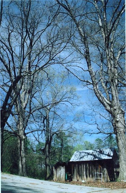 The trees at Granny Jones' house