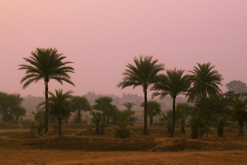 morning india yoga sunrise landscape countryside satyananda rikhia rikhiapeeth satchandimahayajna