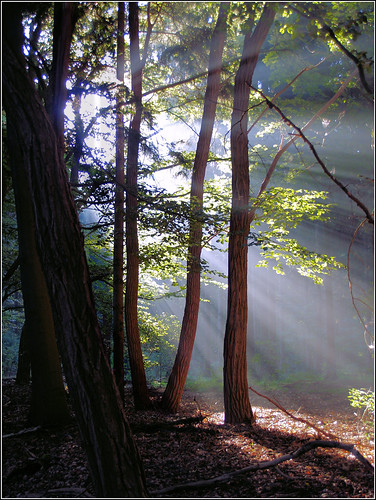 Morningsun in the forest