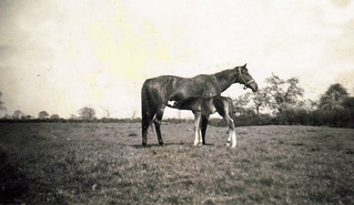 1949 04 29_Horse & Foal at Gribthorpe - Copy (2)