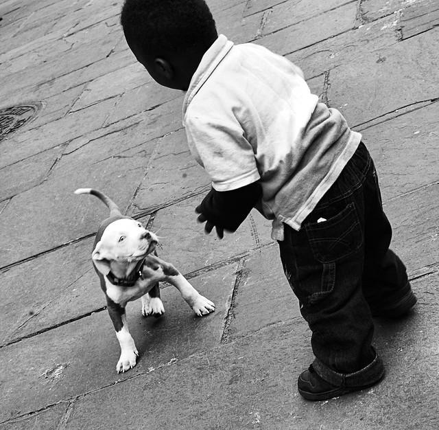 """Hi Puppy"""