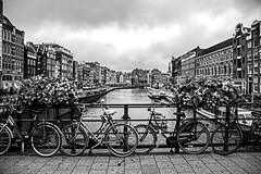Amsterdam Black and White