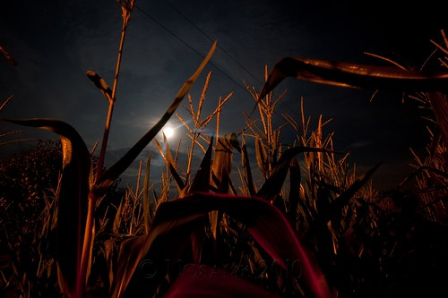 longexposure sky moon sc field night clouds dark corn conway tripod southcarolina full midnight gitzo strawberrymoon arcatech gt2531 nikonafsnikkor1635mmf4gedvr tscf2010ar