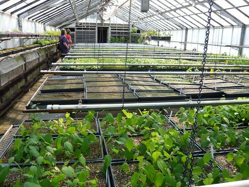 NYC Wildflower Week: Tour the Greenbelt Native Plant ...