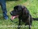 Mon, Jun 28th, 2010 Found Female Dog - Banogue, Croom, Limerick