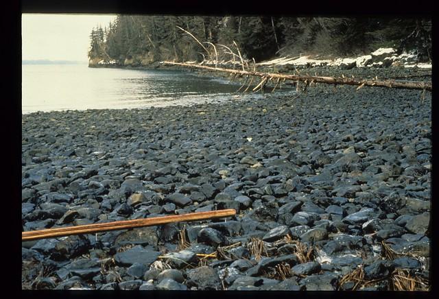 Exxon Valdez Oil Spill - 0016