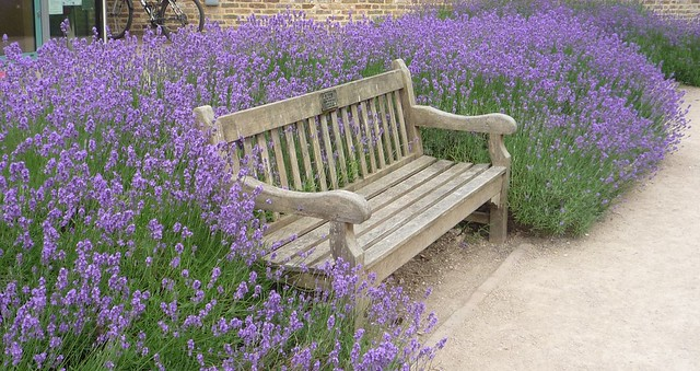 Lavender & Bench: The Walled Garden at Sunbury