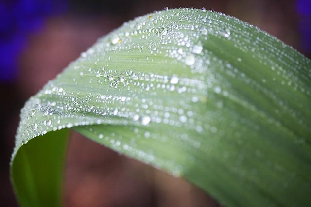 Bent Leaf