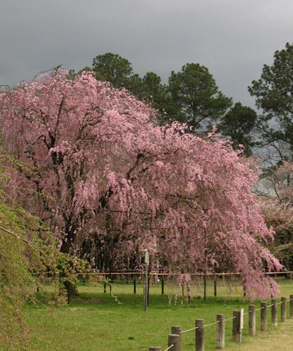 Kamigamo shrine 5