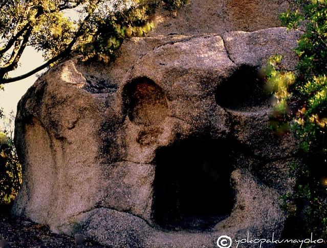 The skull....Neolithic Sardinia.Sa  conca e mortu.Irgoli loc.Ortola.