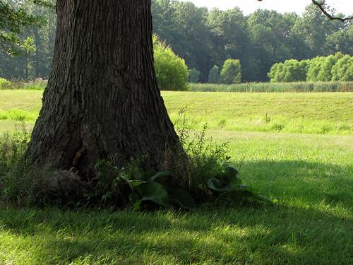 ohio tree field grass landscape shade canonpowershotsx10is glenoaksfarm