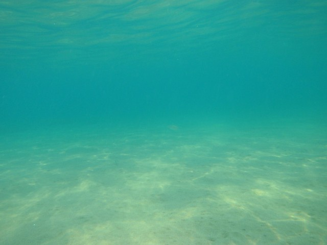 sea floor definition meaning