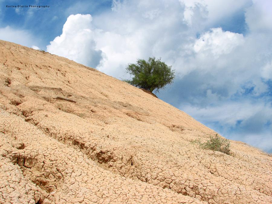 Pozo tajamar - Chaco paraguayo