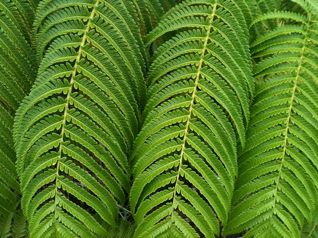 Tree Fern Branches