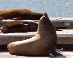 Sea Lions Enjoying!