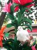 La paloma mascota de un artista callejero