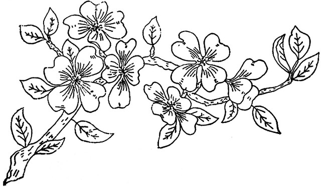 Coloring pages of apple blossoms : Free coloring pages of cherry blossom branch