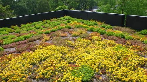 extensive green roofs a primer green roof plan. Black Bedroom Furniture Sets. Home Design Ideas